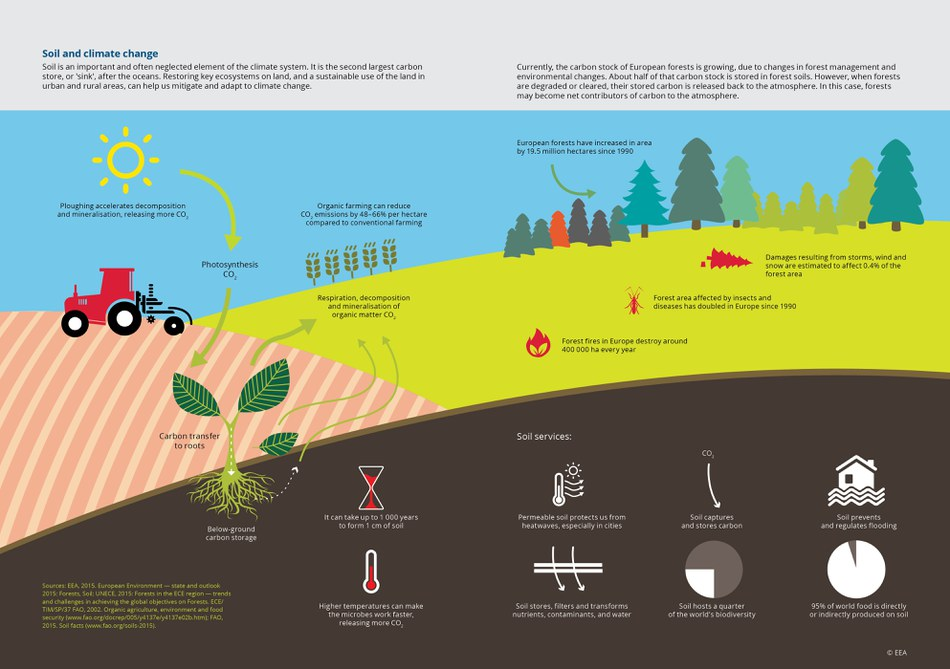 """Soil is an important and often neglected element of the climate system. It is the second largest carbon store, or """"sink"""", after the oceans. Restoring key ecosystems on land, and a sustainable use of the land in urban and rural areas, can help us mitigate and adapt to climate change."""