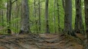 Gleby i grunty a zmiany klimatu