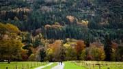Uma gestão sustentável é a chave para florestas saudáveis na Europa