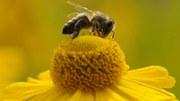 O tema do concurso de fotografia deste ano da AEA é «REDISCOVER Nature»