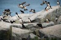 Europe's marine biodiversity remains under pressure