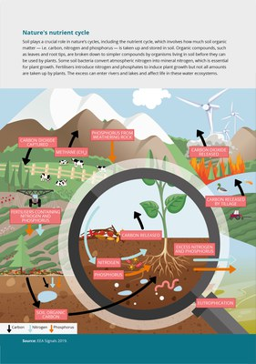 Nature's nutrient cycle