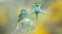 Interview —Vital role of bird monitors