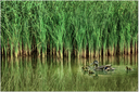 Fotografski natečaj: pošljite nam svoje najboljše slike vode