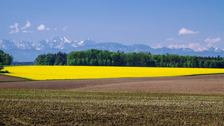 Austria country briefing  - The European environment — state and outlook 2015
