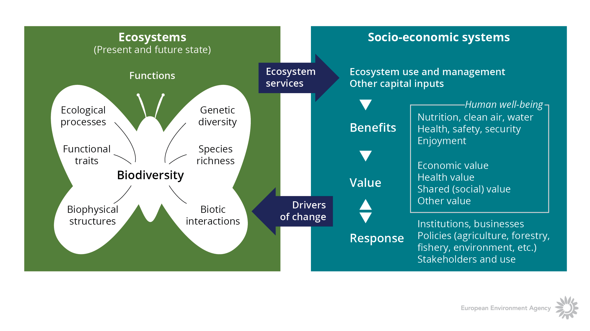 Ecosystem-services and drivers of change