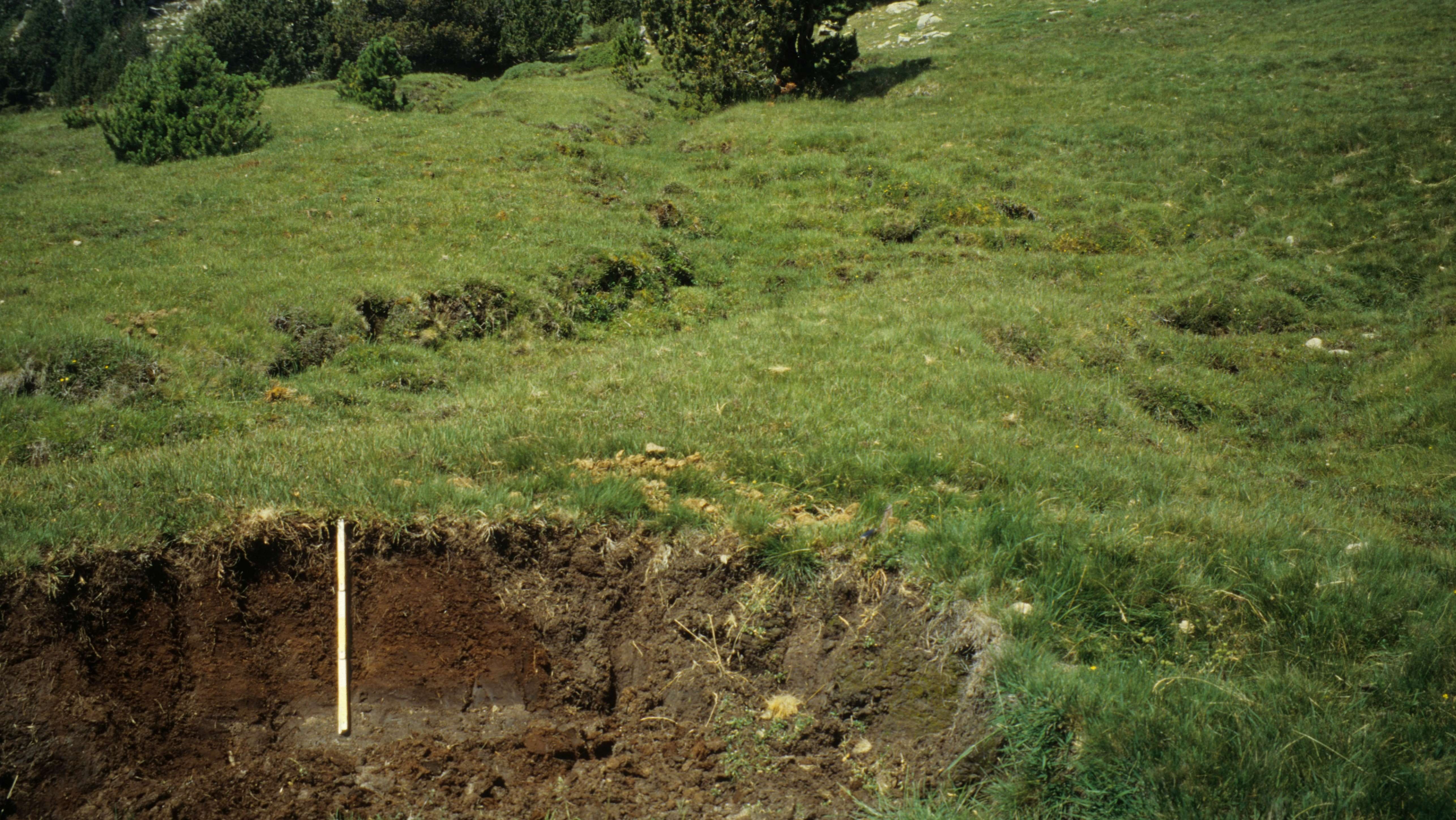 Problems of the Present: Soil Contamination and Depletion