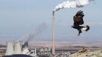 Increasing environmental pollution (GMT 10)