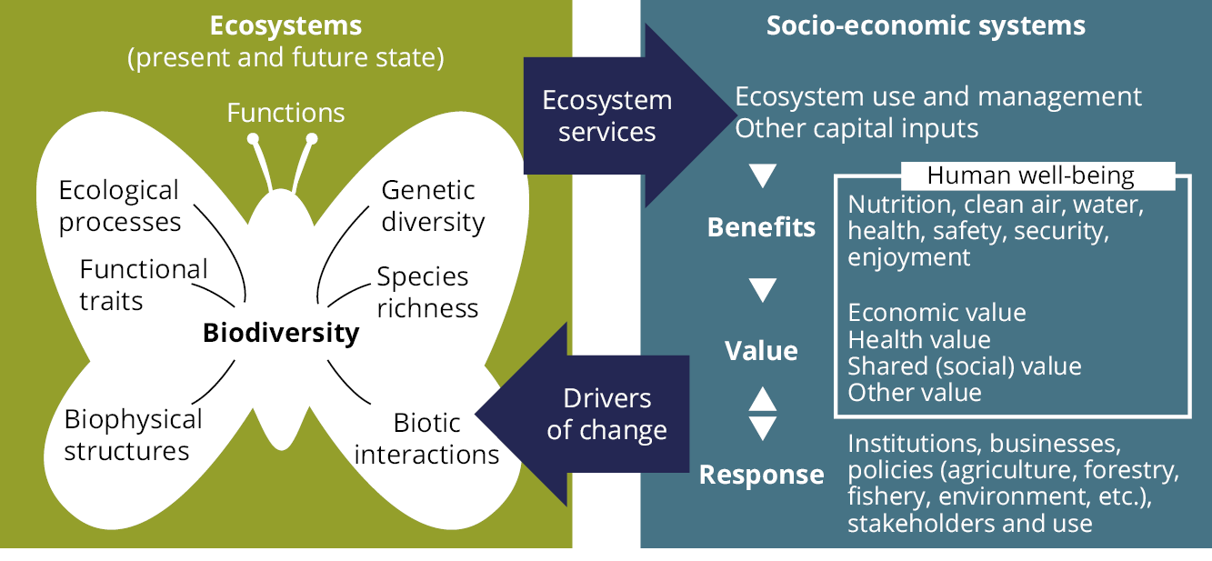 biodiversity and ecosystem services a multi layered relationship pdf