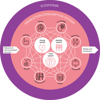 Ecosystems and production-consumption systems