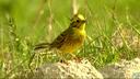 Biodiversity protection – beyond 2010