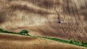 İklim değişikliğine uyum Avrupa'da tarımın geleceğinin anahtarıdır