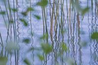 İnsanlar ve doğa için temiz su temini